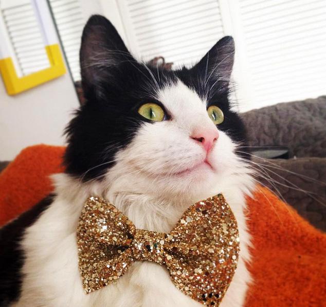 Frankie in his Golden PupTart Bowtie
