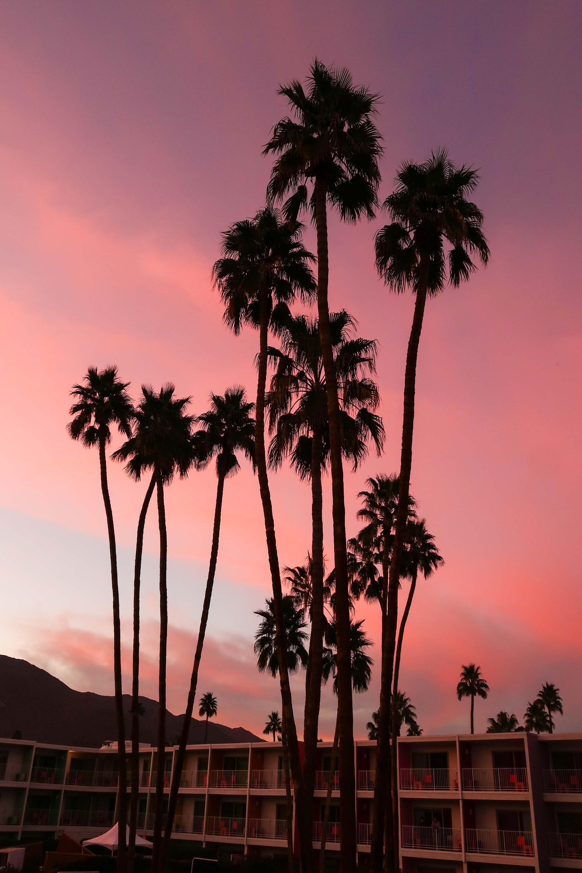 Sun Rise in Palm Springs
